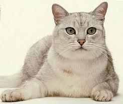 Üks õige kassipidamine algab kahest kassist