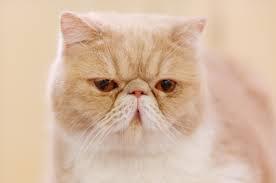 Eaka kassi eest hoolitsemine