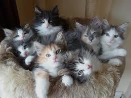 Mida peaks teadma kassipoegadest